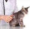 Ветеринарные клиники в Ижморском